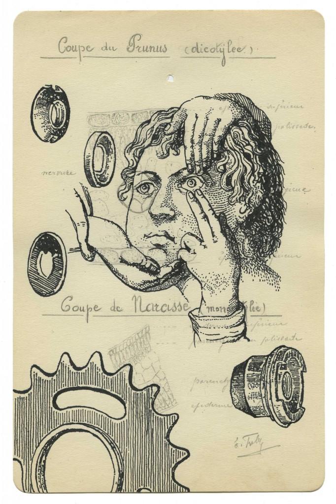 Benjamin Monti, Sans titre (coupe du prunus dycotilée), encre de chine sur dessin trouvé (de la série des histoires naturelles), 22,7 x 14,5 cm, 2010-2015